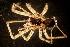 (Stiphidiidae - NZSPI107)  @13 [ ] Copy right (2013) University  of Waikato University of Waikato