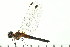 ( - 08SOODO-0004)  @13 [ ] CreativeCommons - Attribution Non-Commercial Share-Alike (2008) Unspecified Biodiversity Institute of Ontario