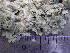 (Parmelia sulcata - O-L-196000)  @11 [ ] by-nc (2014) Reidar Haugan Natural History Museum, University of Oslo, Norway