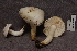  (Tricholoma columbetta - TRTC157043)  @11 [ ] CreativeCommons - Attribution Non-Commercial Share-Alike (2010) Unspecified Royal Ontario Museum