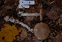  (Amanita spreta - TRTC156889)  @11 [ ] CreativeCommons - Attribution Non-Commercial Share-Alike (2010) Unspecified Royal Ontario Museum