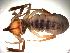 (Eremobatidae - 02-BB09US-E11)  @14 [ ] CreativeCommons - Attribution Non-Commercial Share-Alike (2010) Gergin Blagoev, Biodiversity Intitute of Ontario Biodiversity Institute of Ontario