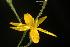 (Croptilon - OSBAR000196)  @11 [ ] Copyright (2014) Florida Museum of Natural History Florida Museum of Natural History