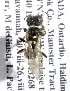  (Crossocerus intidiventris - CCDB-15267 C11)  @11 [ ] 2012  Packer Collection York University Unspecified