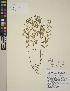 (Scutellaria - CCDB-24905-E01)  @11 [ ] CreativeCommons - Attribution Non-Commercial No Derivatives (2014) Linda Jennings University of British Columbia