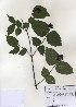 ( - PDBK2010-0982)  @11 [ ] Copyright (2010) Ki Joong Kim Korea University Herbarium (KUS)