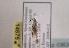 (Coleophora retrodentella - TLMF Lep 03634)  @12 [ ] CreativeCommons - Attribution Non-Commercial Share-Alike (2011) Peter Huemer Tiroler Landesmuseum Ferdinandeum