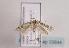 (Coleophora chamaedriella - TLMF Lep 03644)  @14 [ ] CreativeCommons - Attribution Non-Commercial Share-Alike (2011) Peter Huemer Tiroler Landesmuseum Ferdinandeum