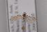 (Coleophora afrosarda - TLMF Lep 04175)  @12 [ ] CreativeCommons - Attribution Non-Commercial Share-Alike (2011) Peter Huemer Tiroler Landesmuseum Ferdinandeum