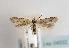 (Mesophleps ochraceella - TLMF Lep 04532)  @13 [ ] CreativeCommons - Attribution Non-Commercial Share-Alike (2011) Peter Huemer Tiroler Landesmuseum Ferdinandeum