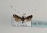 (Nemophora minimella - TLMF Lep 05725)  @14 [ ] CreativeCommons - Attribution Non-Commercial Share-Alike (2011) Peter Huemer Tiroler Landesmuseum Ferdinandeum