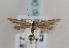 (Mesophleps trinotella - TLMF Lep 06869)  @13 [ ] CreativeCommons - Attribution Non-Commercial Share-Alike (2012) Peter Huemer Tiroler Landesmuseum Ferdinandeum