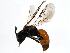 (Sphecodes carolinus - 10PHMAL-1913)  @14 [ ] CreativeCommons - Attribution Non-Commercial Share-Alike (2011) BIO Photography Group Biodiversity Institute of Ontario