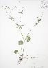 ( - JAG 0481)  @11 [ ] Copyright (2009) Unspecified University of Guelph BIO Herbarium