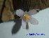 (Burmanniaceae - XM_0528)  @11 [ ] CreativeCommons - Attribution Non-Commercial Share-Alike (2013) Cam Webb, Endro Setiawan & Hery Yanto Arnold Arboretum of Harvard University