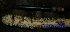 (Raphidophora - XM_0610)  @11 [ ] CreativeCommons - Attribution Non-Commercial Share-Alike (2013) Cam Webb, Endro Setiawan & Hery Yanto Arnold Arboretum of Harvard University
