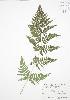 ( - BAR006)  @11 [ ] Copyright (2009) Unspecified University of Guelph BIO Herbarium
