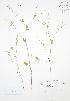 ( - BAR196)  @11 [ ] Copyright (2009) Unspecified University of Guelph BIO Herbarium
