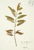 ( - JAG 0323)  @11 [ ] Copyright (2009) Unspecified University of Guelph BIO Herbarium