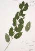 ( - RBGB 042)  @11 [ ] Copyright (2009) Unspecified University of Guelph BIO Herbarium