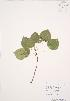 ( - AP380)  @11 [ ] Copyright (2009) Unspecified University of Guelph BIO Herbarium