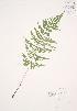 ( - JAG 0115)  @11 [ ] Copyright (2009) Unspecified University of Guelph BIO Herbarium