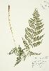 ( - AP188)  @11 [ ] Copyright (2009) Unspecified University of Guelph BIO Herbarium