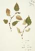 ( - JAG 0244)  @11 [ ] Copyright (2009) Unspecified University of Guelph BIO Herbarium