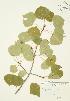 ( - JAG 0205)  @11 [ ] Copyright (2009) Unspecified University of Guelph BIO Herbarium