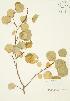 ( - JAG 0277)  @11 [ ] Copyright (2009) Unspecified University of Guelph BIO Herbarium