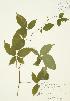 ( - JAG 0328)  @11 [ ] Copyright (2009) Unspecified University of Guelph BIO Herbarium