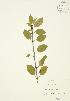 ( - JAG 0372)  @11 [ ] Copyright (2009) Unspecified University of Guelph BIO Herbarium