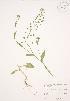 ( - JAG 0460)  @11 [ ] Copyright (2009) Unspecified University of Guelph BIO Herbarium
