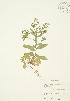 ( - JAG 0122)  @11 [ ] Copyright (2009) Unspecified University of Guelph BIO Herbarium