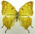 (Charaxes zoolina - USNM ENT 00676413)  @14 [ ] Unspecified (default): All Rights Reserved  Unspecified Unspecified
