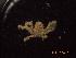 (Collodes - BOPD_PRIMBA 058)  @11 [ ] CreativeCommons – Attribution Non-Commercial Share-Alike (2014) Unspecified Laboratorio de Zoología de Invertebrados