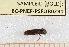 ( - BC-PNEF-PSFOR0291)  @12 [ ] Copyright (2013) Thierry Noblecourt Laboratoire National d'Entomologie Forestière, Quillan, France