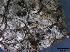 (Amphisphaerella - O-F247849)  @11 [ ] by-nc-sa (2013) Teppo Rämä Norwegian Institute for Nature Research (NINA)