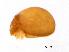 (Oribotritiidae - BIOUG15123-E10)  @11 [ ] CreativeCommons – Attribution Non-Commercial Share-Alike (2014) Biodiversity Institute of Ontario Biodiversity Institutue of Ontario