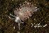 (Flabellina trophina - BIOUG12670-F08)  @11 [ ] CreativeCommons - Attribution Non-Commercial Share-Alike (2017) Kara Layton Biodiversity Institute of Ontario
