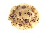 (Discodorididae - CCDB22758-C05)  @14 [ ] CreativeCommons - Attribution Non-Commercial Share-Alike (2014) Kara Layton Biodiversity Institute of Ontario