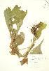 ( - RBG 149)  @11 [ ] Copyright (2009) Unspecified University of Guelph BIO Herbarium