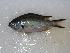 (Chromis - JHLOW00075)  @14 [ ] Unspecified (default): All Rights Reserved  Unspecified Unspecified