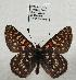 (Euphydryas editha - 247NK-DTCP04.1)  @14 [ ] Unspecified (default): All Rights Reserved  Unspecified Unspecified