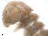 (Haplodesmidae - CHIgx09-016-007)  @11 [ ] CreativeCommons - Attribution Non-Commercial Share-Alike (2010) BIO Photography Group Biodiversity Institute of Ontario