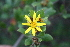  (Chrysanthemoides - AM0281)  @14 [ ] CreativeCommons - Attribution Non-Commercial Share-Alike (2011) Maria (Masha) Kuzmina Canadian Center for DNA Barcoding