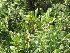 (Diospyros dichrophylla - Abbott9162)  @11 [ ] Unspecified (default): All Rights Reserved  Unspecified Unspecified