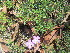  (Verbena tenuisecta - PPRI-0052)  @11 [ ] No Rights Reserved  Unspecified Unspecified