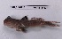 (Periophthalmus barbarus - ES07-F505)  @11 [ ] CreativeCommons - Attribution Non-Commercial Share-Alike (2013) SAIAB SAIAB