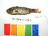  (Amblygobius albimaculatus - KNY2011-153)  @12 [ ] CreativeCommons - Attribution Non-Commercial Share-Alike (2011) SAIAB SAIAB